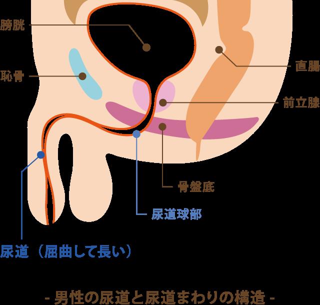 射精 後 尿 痛み